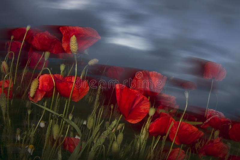 Impressionism and expressionism in photography royalty free stock image
