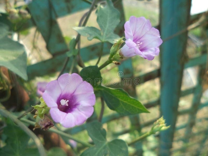 Impressionnant floral de belle fleur par nature images libres de droits