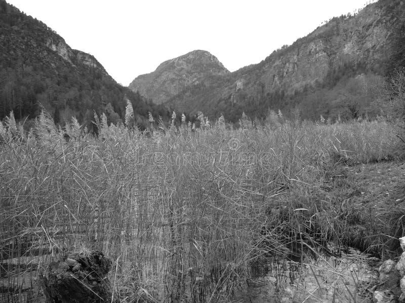 Impressions à Thumsee à Bad Reichenhall le jour de l'automne photos libres de droits