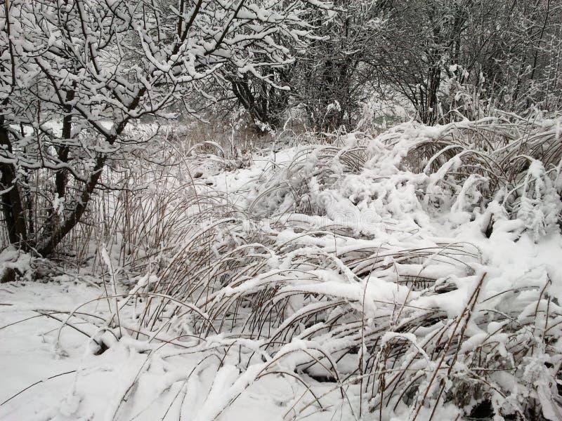 Impressions d'hiver - 01 noirs et blancs images stock