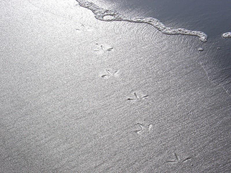 Impressions d'oiseau dans le sable images stock