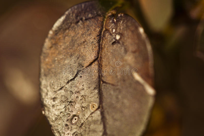 Impressions of a Winter stock photography