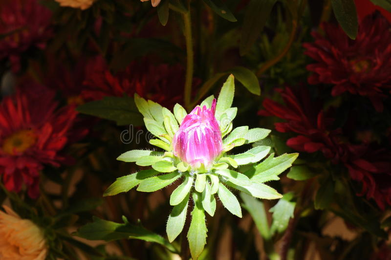 Impressive colorful flower in macro view royalty free stock photo
