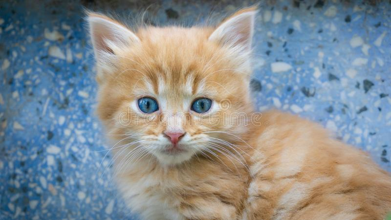 Impressive portrait of little cute kitten with blue eyes. Street tabby cat and lifestyle concept royalty free stock image