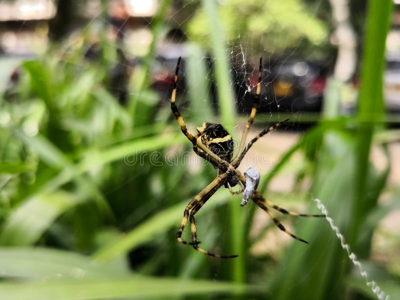 Impressive spider eating an insect prey in a park garden stock photos
