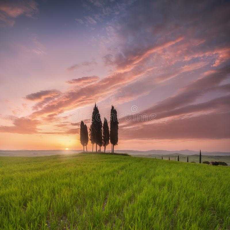 Impressive spring landscape,view with cypresses trees ,Tuscany,Italy. Beautiful background. Impressive spring landscape,view with cypresses trees ,Tuscany,Italy royalty free stock images