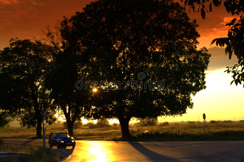 Impressive sunset roadside trees. Sun setting behind roadside trees,dramatic sky over fields.Picture taken on July 13th,2014.Bulgaria royalty free stock photography