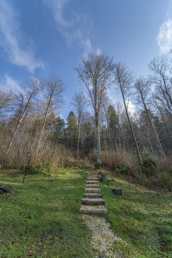 Romanian forest entrance, vertical impressive view. Impressive vertical view of a Romanian forest with leafless tall trees and the stepped path that leads inside royalty free stock photos