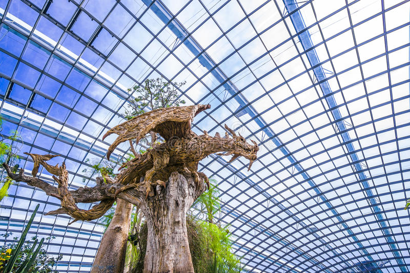 Impressive `Wooden` Dragon in Flower Dome at Gardens by the Bay, Singapore royalty free stock photo