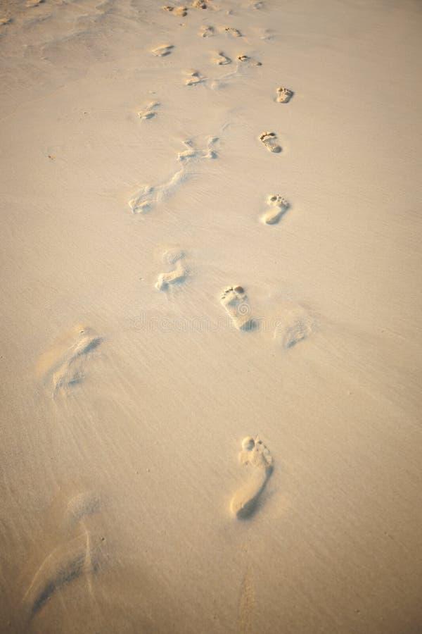Imprime pares de pés na praia imagens de stock