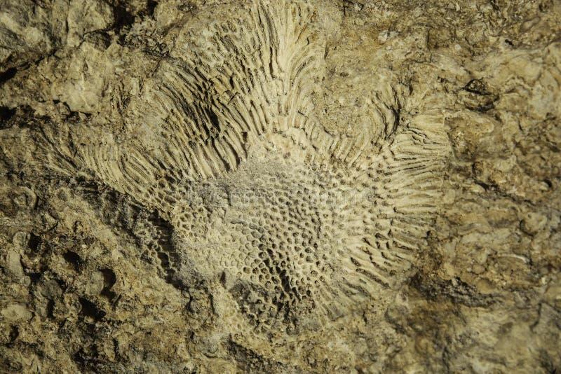Imprimir do coral imagem de stock