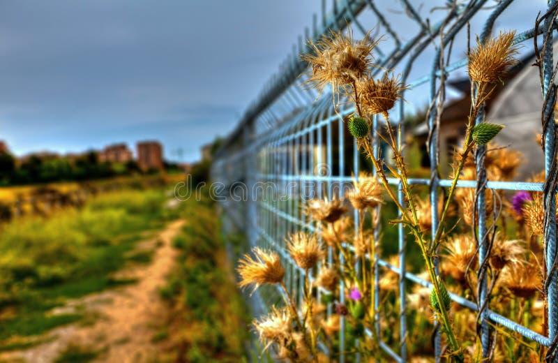 Download Imprisoned Flowers stock photo. Image of iron, garden - 26823206