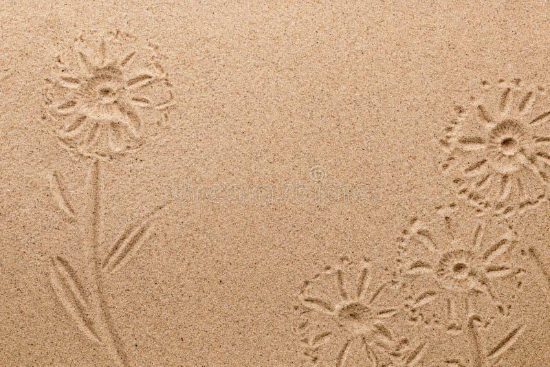Impronta dei fiori del campo sulla sabbia Immagine concettuale immagini stock libere da diritti