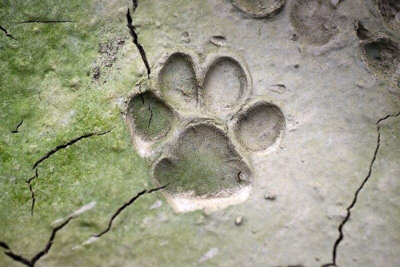 impronta di cane su fango - fotografia stock libera da diritti