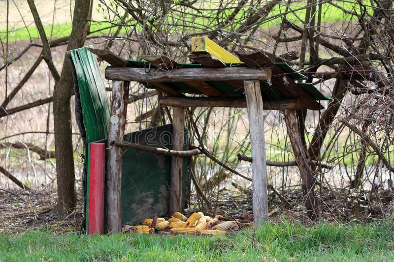 Improvised wooden structure with roof used to store food for wildlife in form of hay and corn surrounded with branches and uncut royalty free stock image