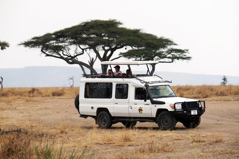 Impulsión del juego de Serengeti fotografía de archivo libre de regalías