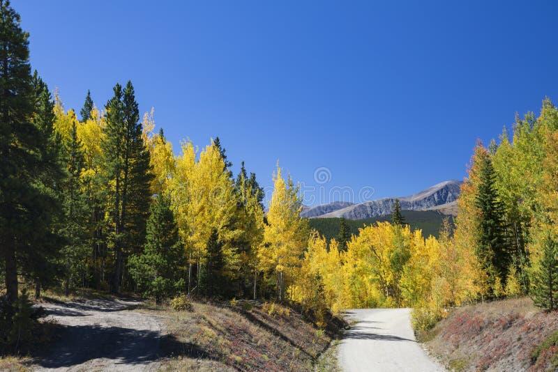 Impulsión escénica de la montaña a través de álamos tembloses con la montaña fotografía de archivo libre de regalías