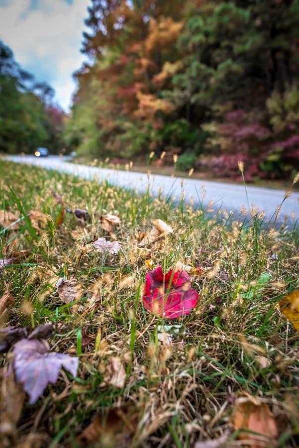 Impulsión escénica del otoño a lo largo de la ruta verde azul del canto imágenes de archivo libres de regalías