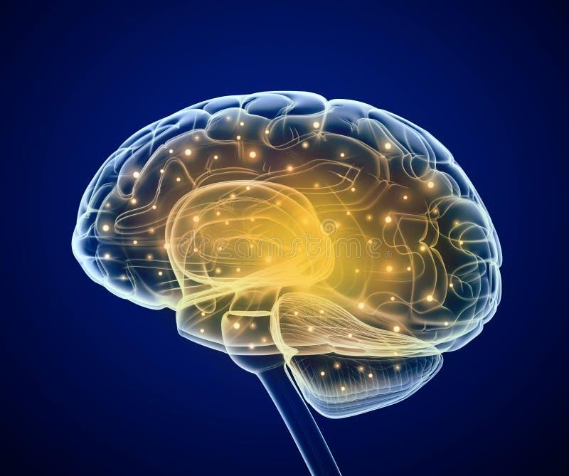 Impulsions de cerveau Prosess pensants illustration de vecteur