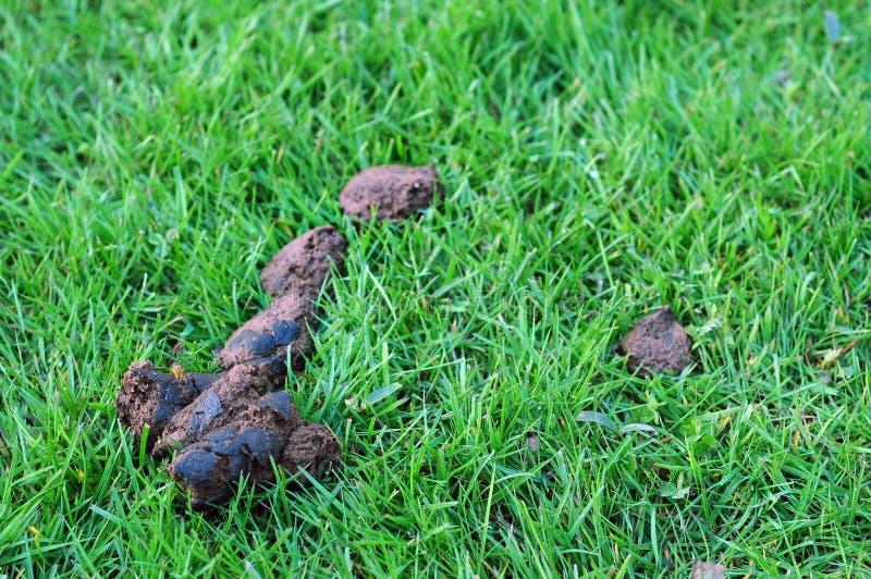Impulso del perro en hierba foto de archivo libre de regalías