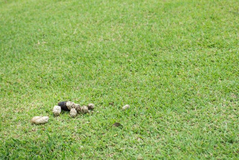 Impulso del perro seco en campo de hierba imagen de archivo libre de regalías