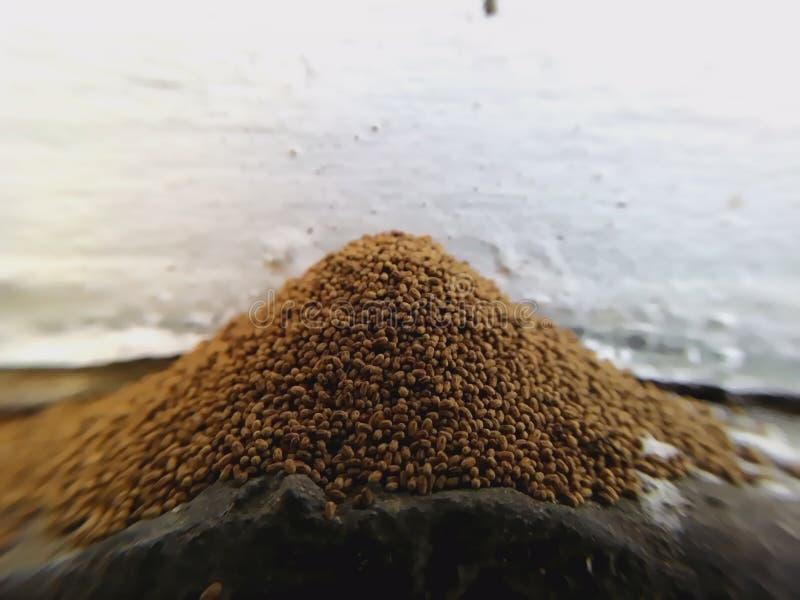 Impuretés de termite photo libre de droits