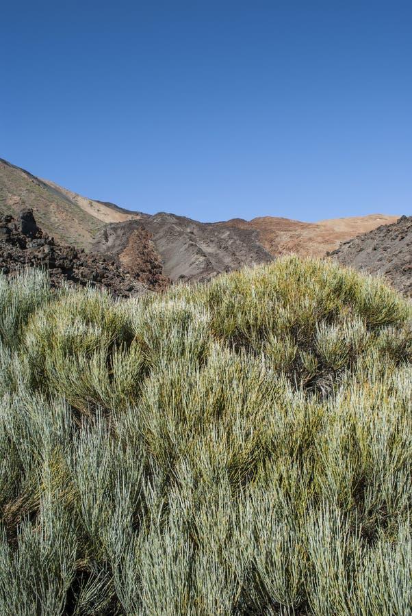 Inaktiv vulkan (Tenerife, kanariefåglar, Spanien) royaltyfri fotografi
