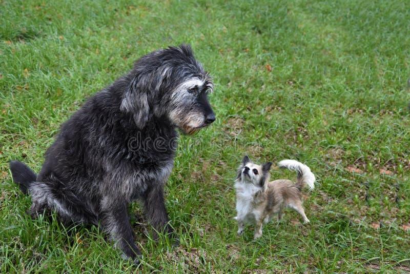 Inbjudan att spela, hundvänner att möta sig royaltyfria bilder