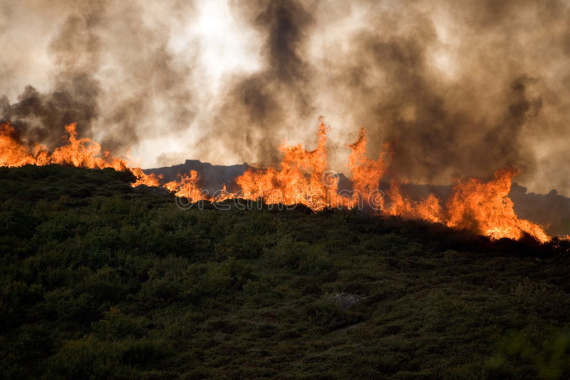 Incêndio & desflorestamento fotos de stock royalty free