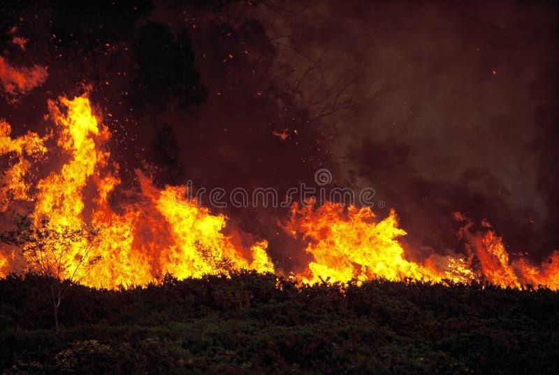 Incêndio de Bush fotos de stock
