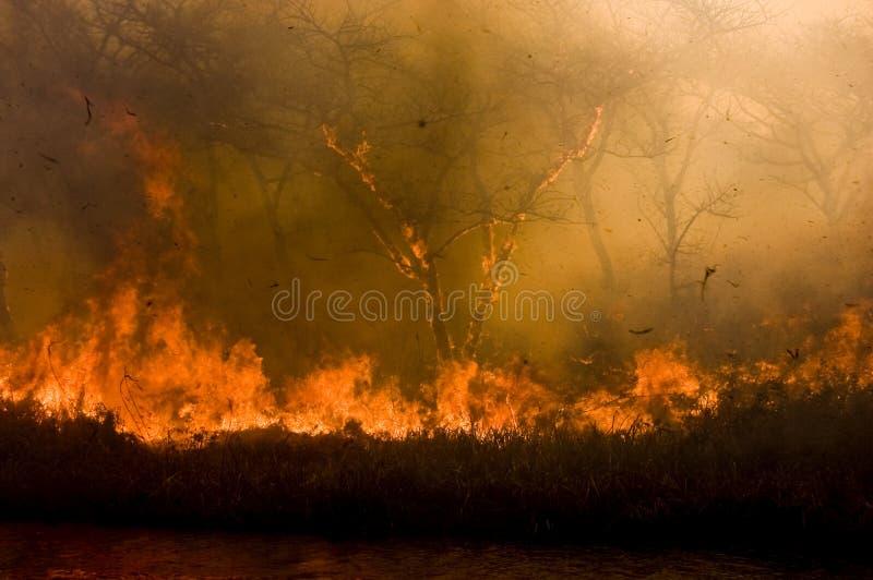 Incêndio de Bush foto de stock