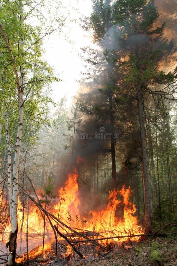 Incêndio florestal fotografia de stock