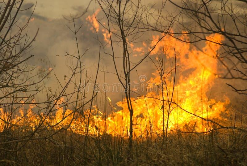 Incêndio florestal fotografia de stock royalty free
