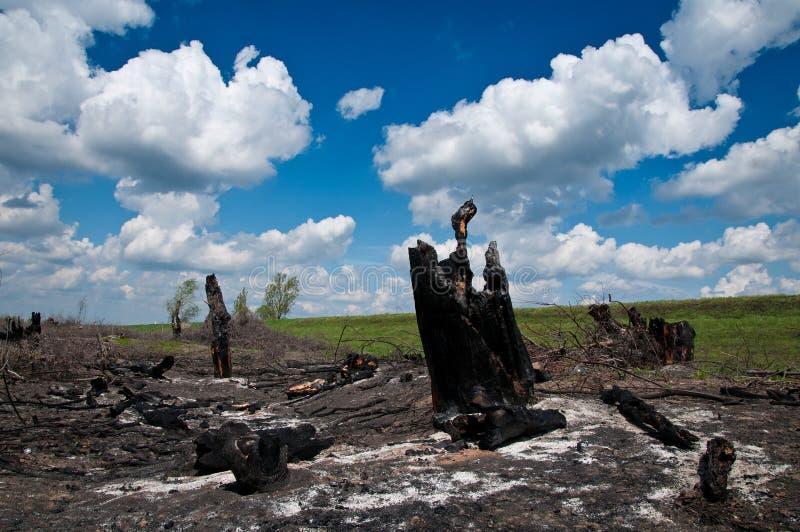 Incêndio florestal imagens de stock royalty free