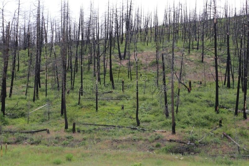Incêndio florestal após a Floresta Negra imagens de stock