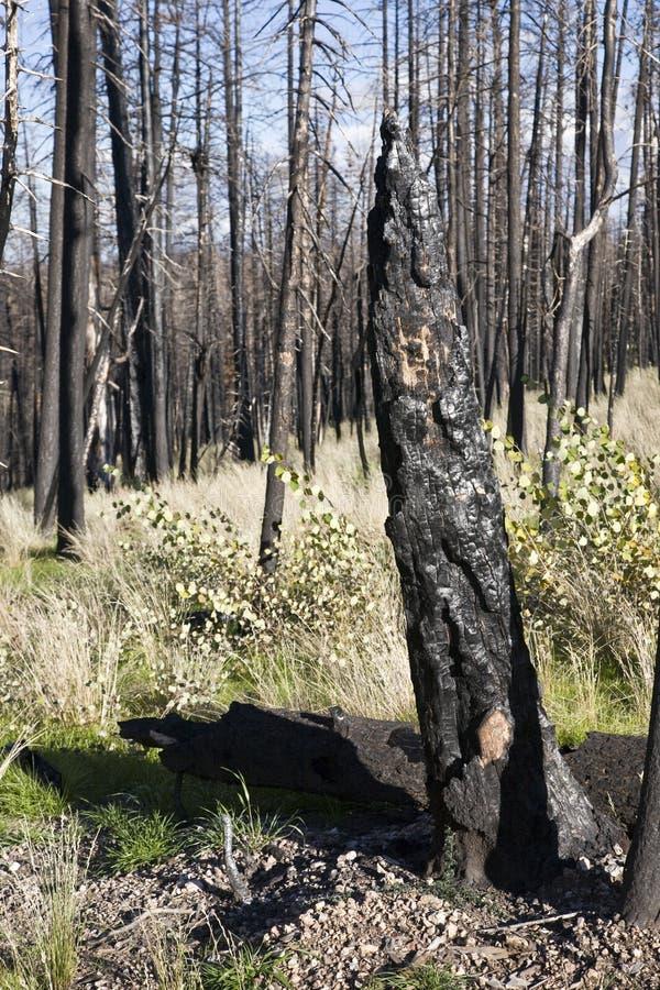 Incêndio florestal (AQ) imagens de stock