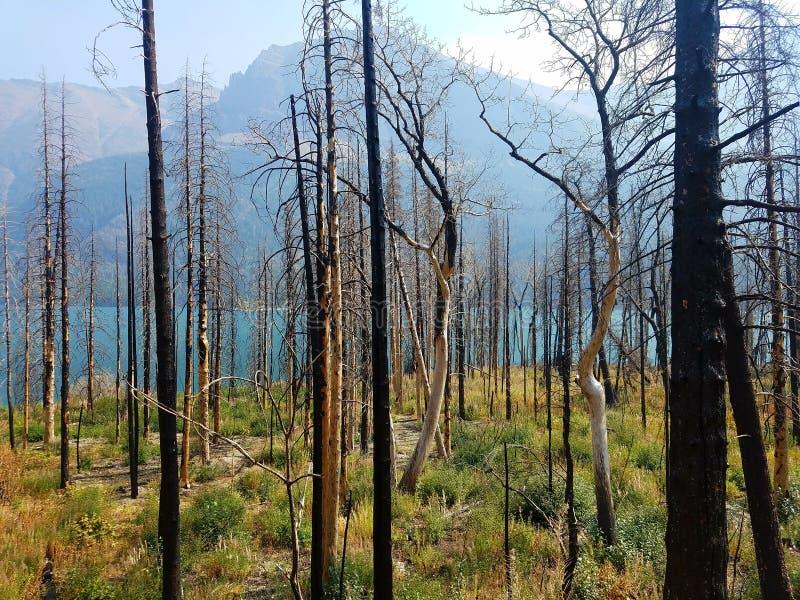 incêndio florestal de 4k Rocky Mountain com as flores no verão e no lago imagens de stock royalty free