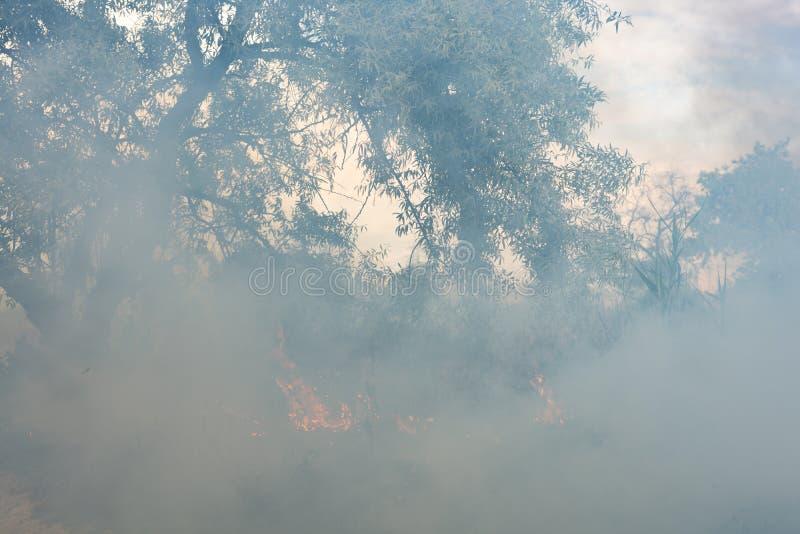 Incêndio florestal que queima a grama seca verão, seca fotografia de stock