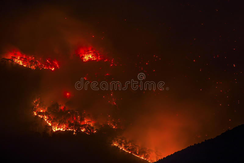 Incêndio na floresta fotografia de stock royalty free