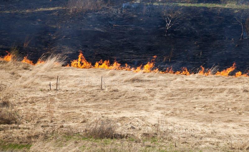 Incêndio na grama seca fotos de stock