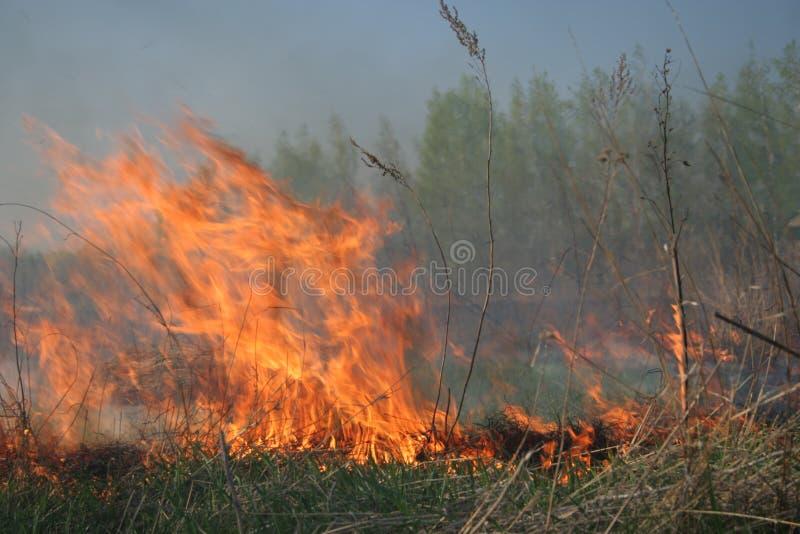Incêndio que aproxima-se à floresta fotos de stock