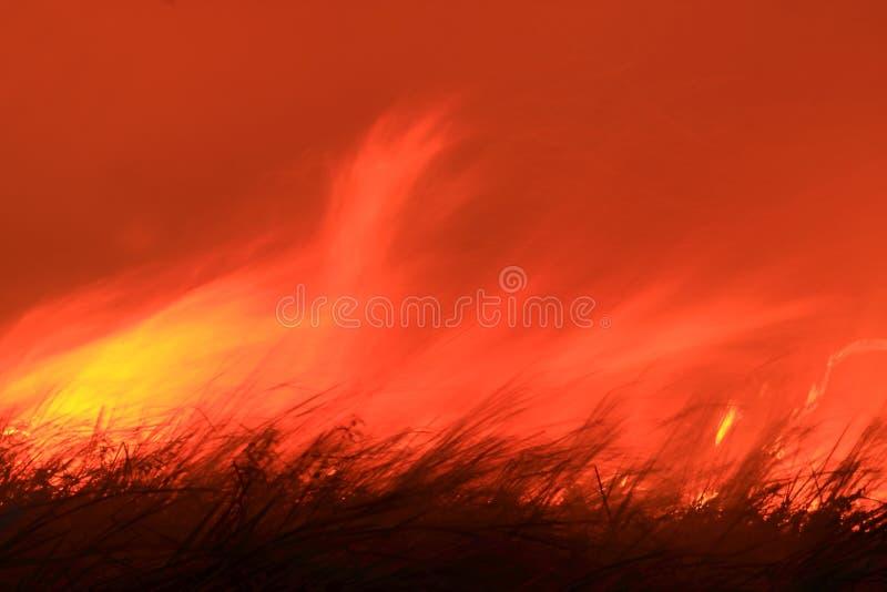 Incêndio que queima o bushland direto selvagem fotografia de stock