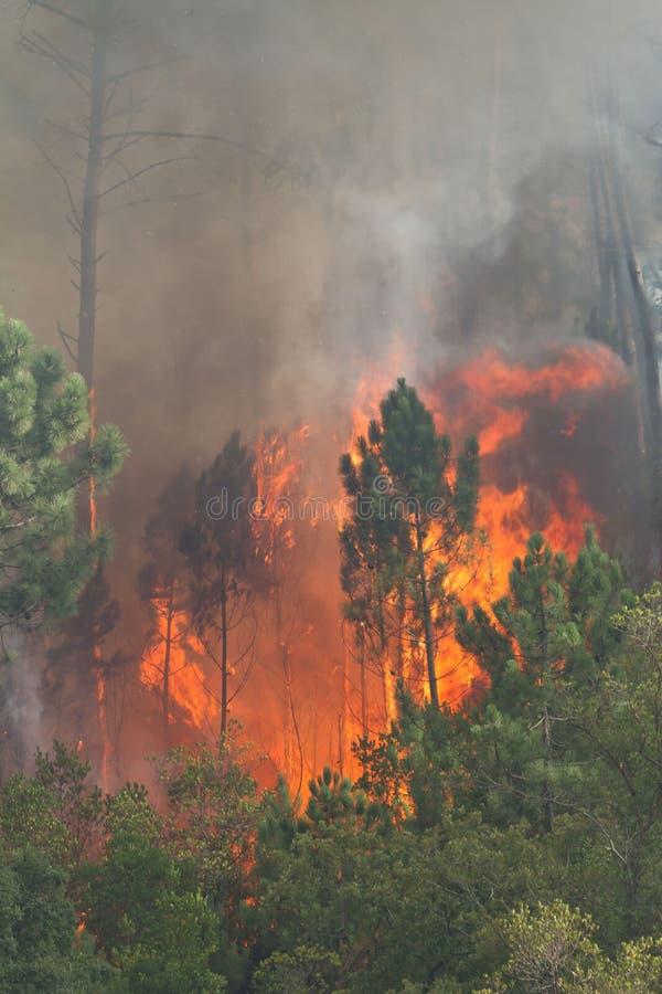Incêndio selvagem da floresta foto de stock royalty free