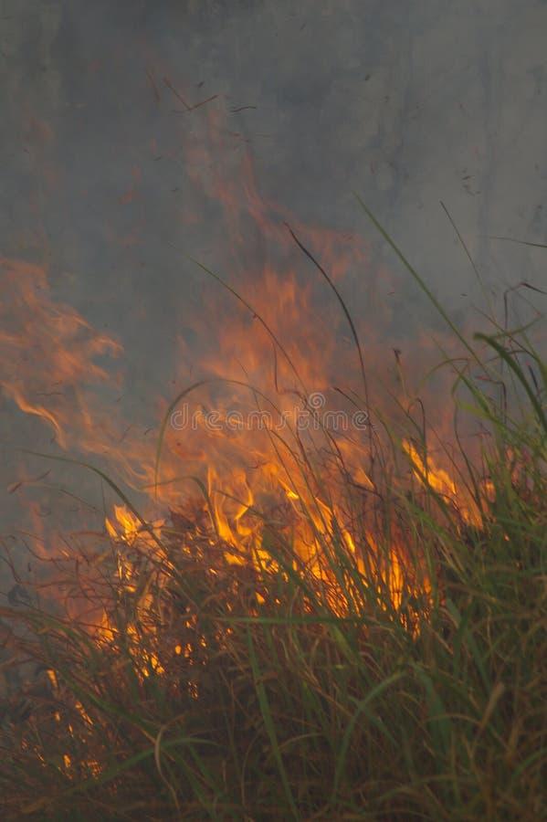 incêndios fotos de stock royalty free