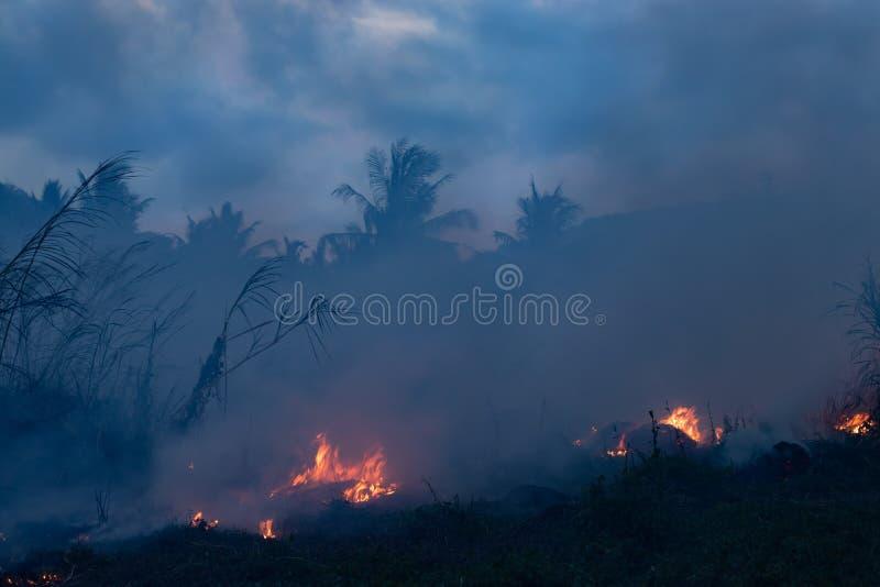 Inc?ndio florestal na noite Os arbustos est?o queimando-se, o ar s?o polu?dos com fumo r fotos de stock royalty free