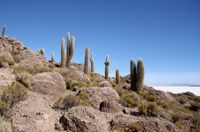 Inca Island med kakturs i Uyuni den salta öknen, Bolivia arkivfoton