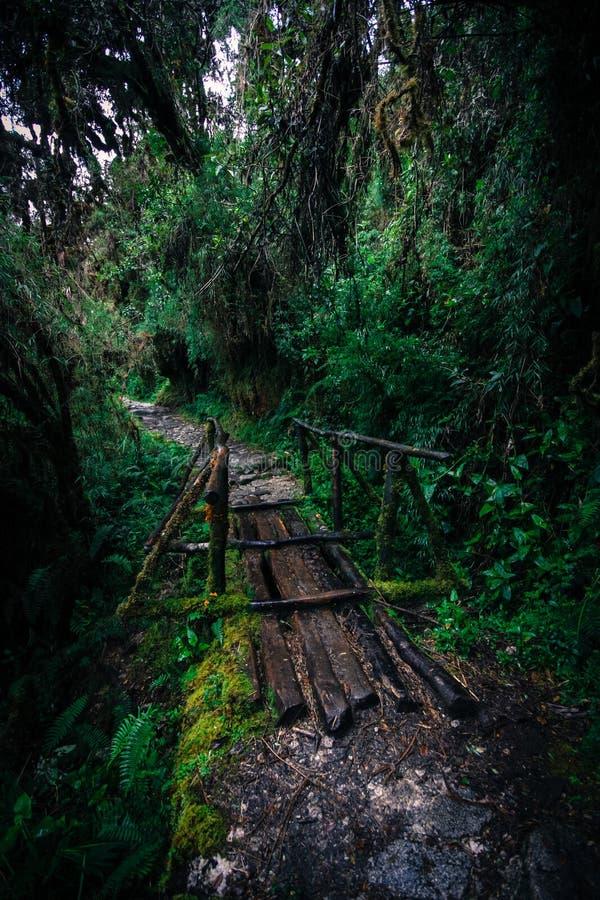Inca Trail royaltyfri foto