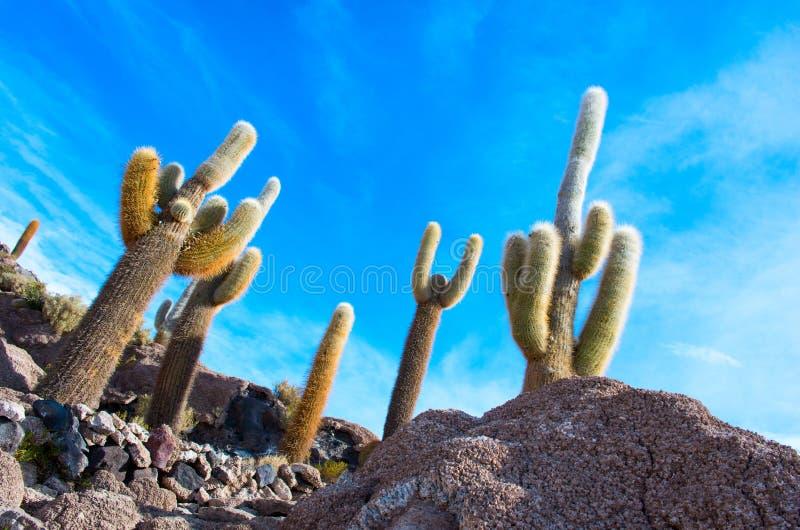 Incahuasi island, Bolivia. Incahuasi island in Salar de Uyuni, Bolivia royalty free stock photos