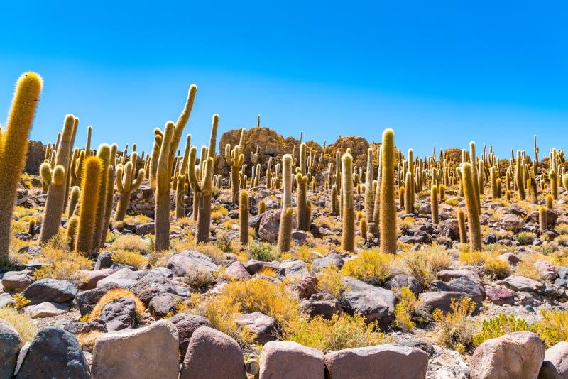Incahuasi Island the Cactus Island in the middle of Salar de Uyuni. In Bolivia stock images