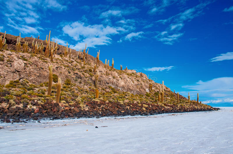 Incahuasi island in Salar de Uyuni. Bolivia. Incahuasi island in Salar de Uyuni, Bolivia stock images